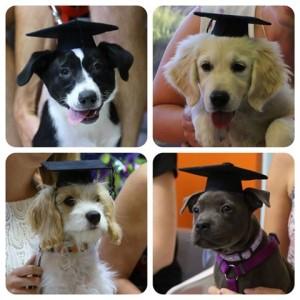Puppy Preschool Graduates
