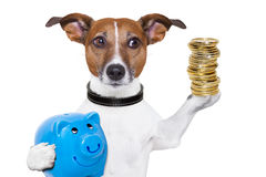 http://www.dreamstime.com/royalty-free-stock-images-money-saving-dog-image29293559