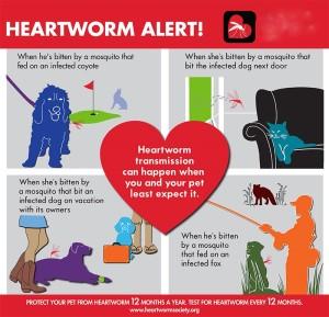 heartworm-society-hw-vectors
