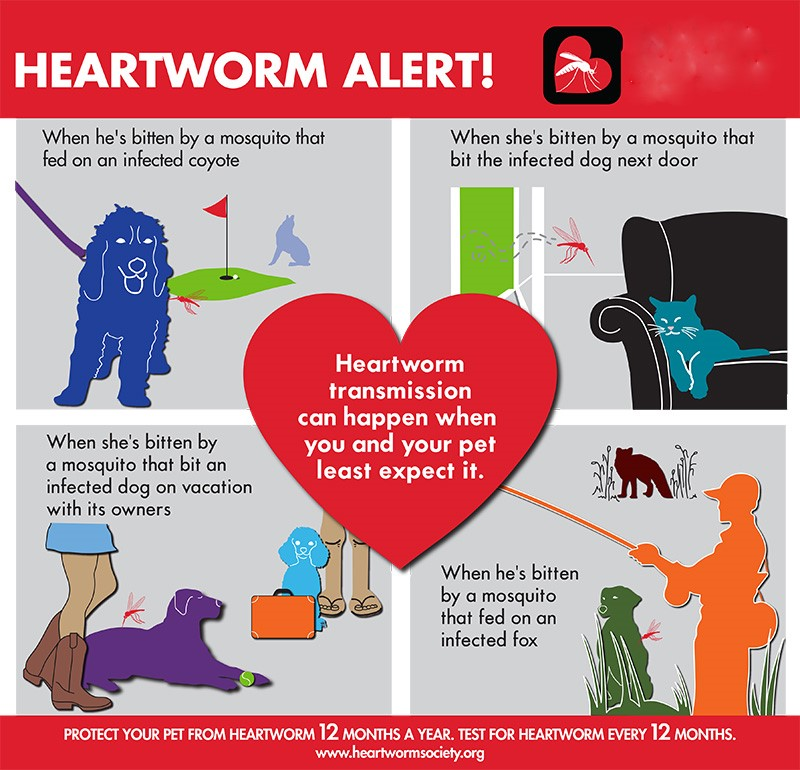 heartworm-society-hw-vectors