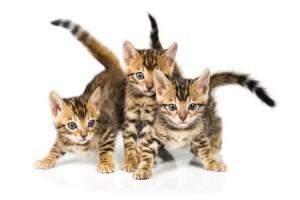 Kittens-300x200
