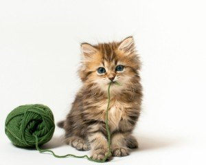 cat-kitten-ball-green-thread-game-white-background-1024x1280