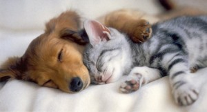 puppies-and-kittens-pictures