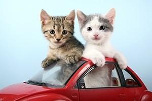 rides w kitty