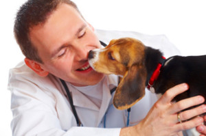 Puppy licking vet