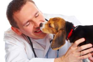 Puppy licking vet