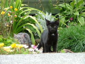 cats-in-garden