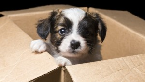 cute dog box