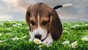 dog-flower-628x363