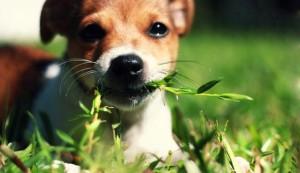 eat-grass