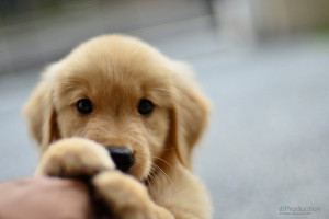 super-cute-puppy-look-awww-photo