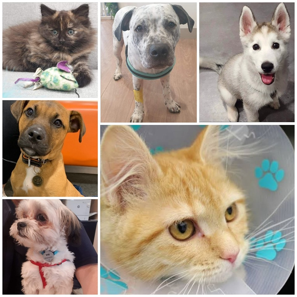 Desexing Your Pet How You Can Help Your Dog Or Cat Live A Longer Happier Life Maroondah City Council